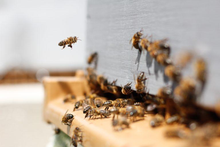 Legislation ruche