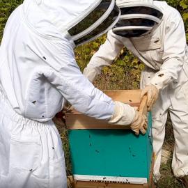 une ruche